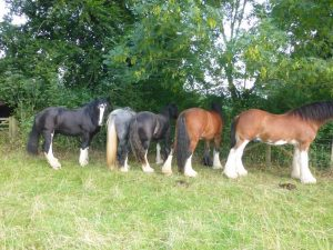 all shires
